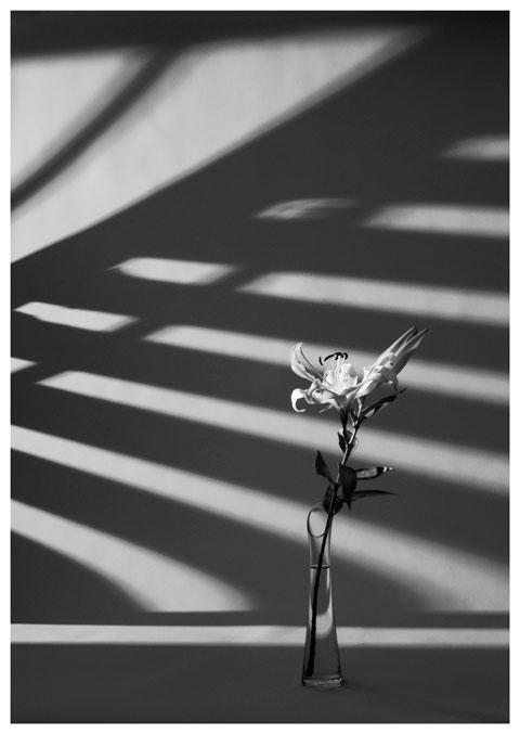 frauke-staerk_flowers_blumen-portraits_01