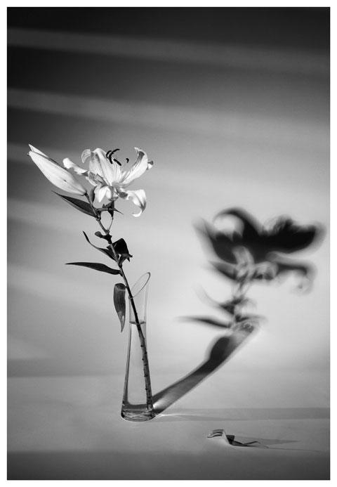 frauke-staerk_flowers_blumen-portraits_02