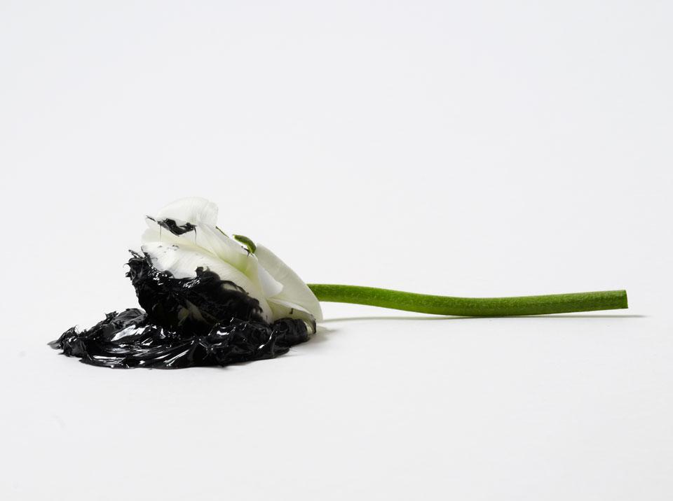 frauke-staerk_flowers_fett-blumen_01