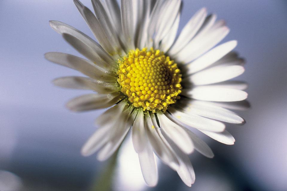 frauke-staerk_flowers_makro_04