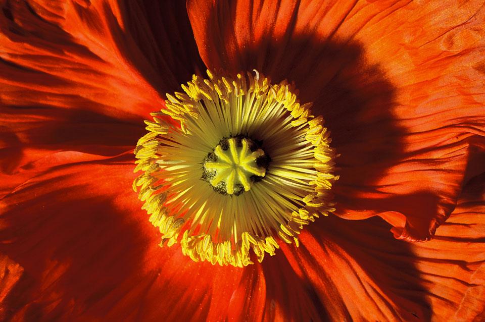 frauke-staerk_flowers_makro_07