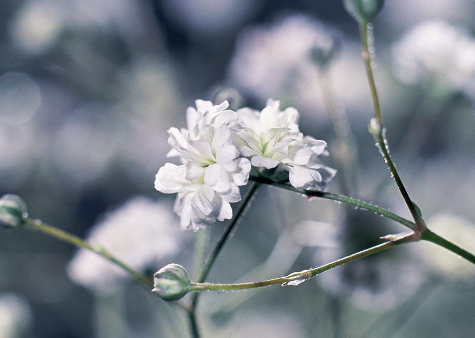 frauke-staerk_flowers_makro_08