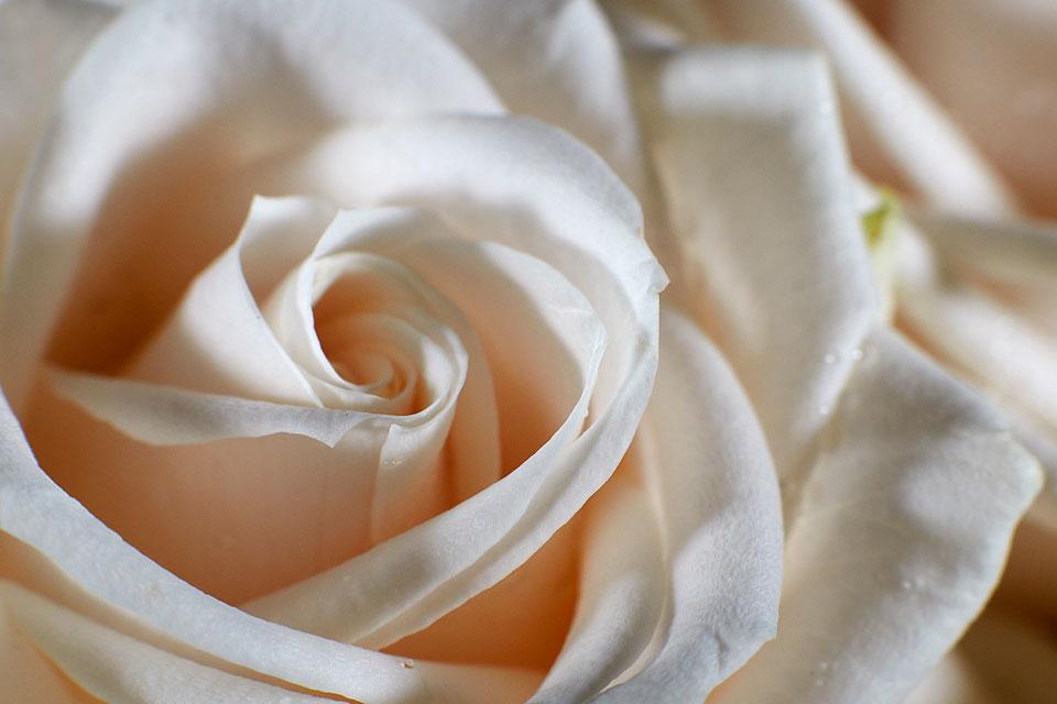 frauke-staerk_flowers_makro_13
