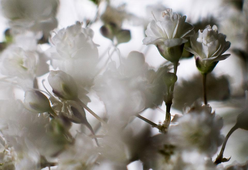 frauke-staerk_flowers_makro_18