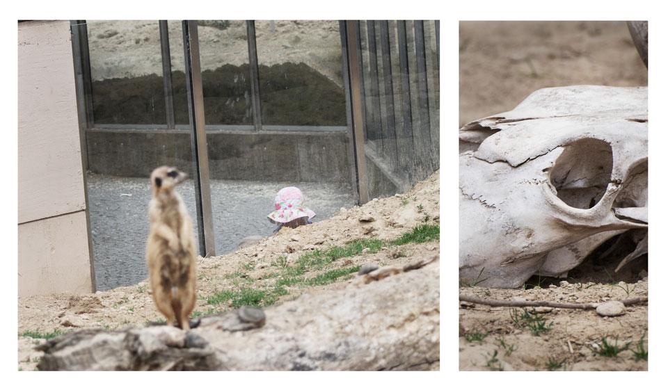 frauke-staerk_zoo_06