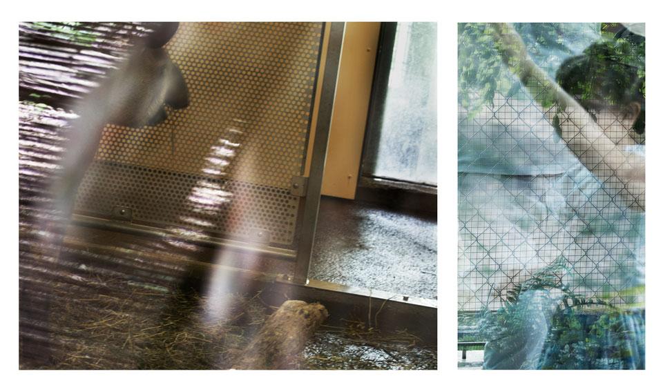 frauke-staerk_zoo_08